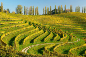 jeruzalem-vinograd-panorama_134016
